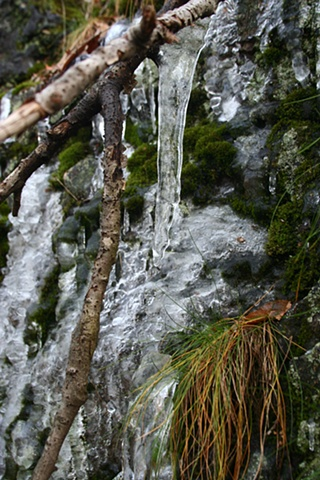 Picture of Ice and Moss