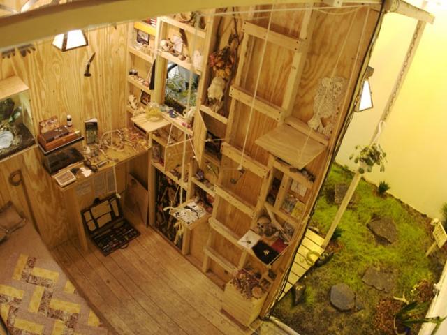 Cabin of Curiosity