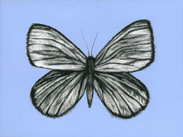 Shannon Oliverio, Drawing, Charcoal and Pastel, Butterfly