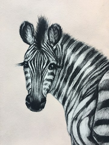Zebra, Charcoal, Pastel and Acrylic on Paper, Pale Pink