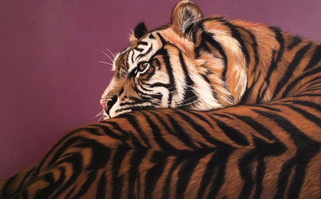 Tiger Drawing, Charcoal, Pastel and Acrylic