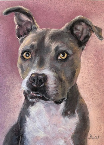 pitbull pet portrait drawing dog pastel painting for sale artist for hire commission fine art aimee kuester charcoal