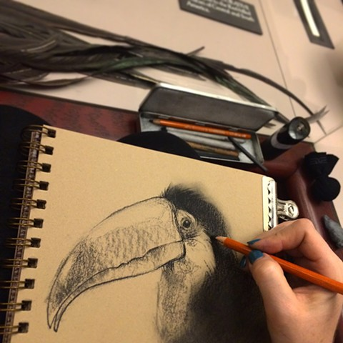 Toucan rough in