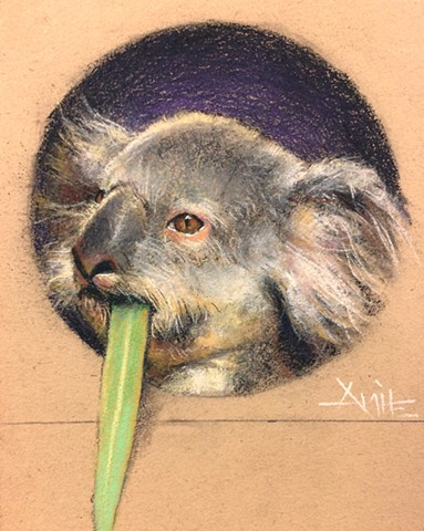aimee kuester animal charcoal pastel for sale drawing art artwork koala bear eucalyptus stoned stoner weed high smoker