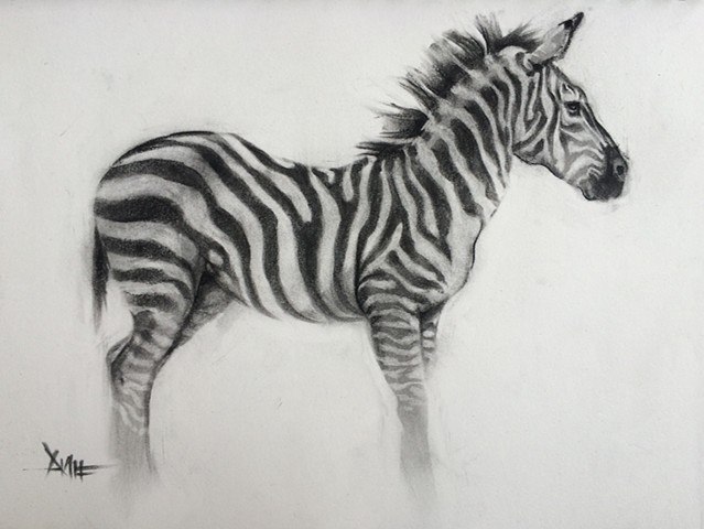aimee kuester animal natural history museum la charcoal pastel for sale drawing art artwork zebra stripes african animals