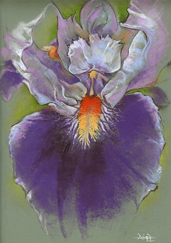 aimee kuester artist fleur de lis iris flower floral pastel colorful purple pretty nature macro natural history museum la charcoal pastel for sale drawing art artwork