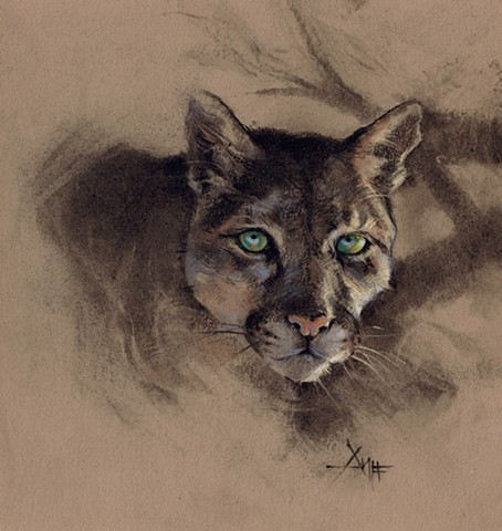 aimee kuester animal natural history museum la charcoal pastel for sale drawing art artwork mountain lion cougar big cats feline cat cats animals beautiful for sale aimee artist