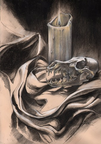 aimee kuester skull coyote animal bones candle night still life jaws teeth animal natural history museum la charcoal pastel for sale drawing art artwork