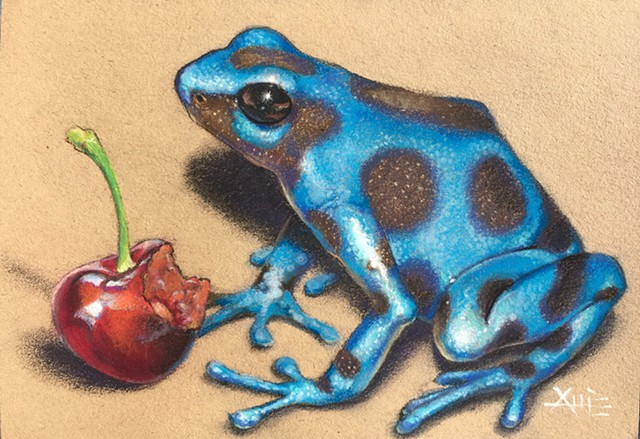 frog poison blue dart frog aimee kuester realistic drawing pastel charcoal cherry cherries wildlife frogs art commission