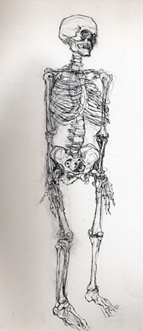 anatomy skeleton drawing of a human