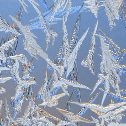 A Paraverse of Frost #1