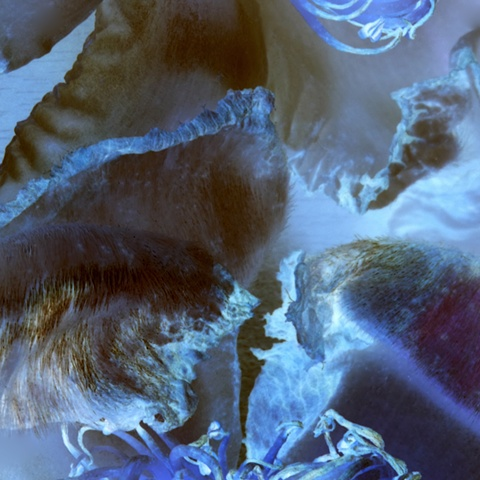 abstract macro digital photography