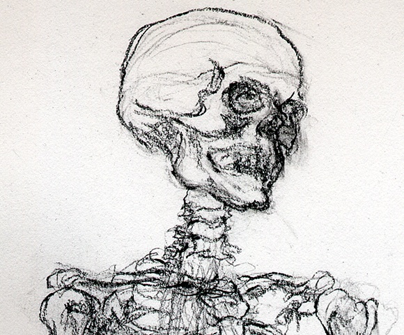 anatomy skeleton drawing of a human cranium
