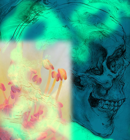 El Día de los Muertos, photo collage (anatomy skeleton pecil drawing and digital macro photograph) by Sandra Clyne