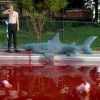 Recreating Sharks