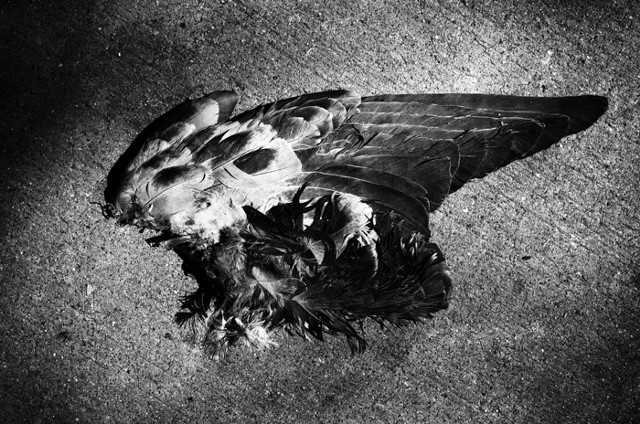 Jason Paul Roberts; Murder of Birds; street photographer; street photography; Leica; Denver; Colorado; CO