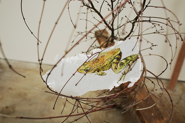 Like Grafting a Live Branch to a Dead Beam II California Red Legged Frog