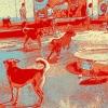Dog Days of Bucktown