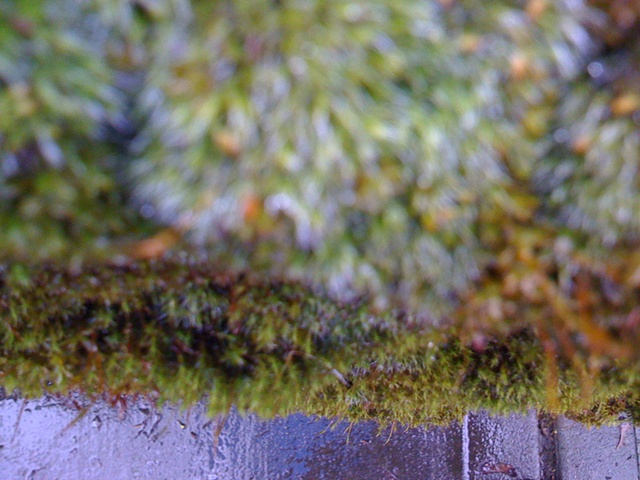 Faerie Moss, View Two