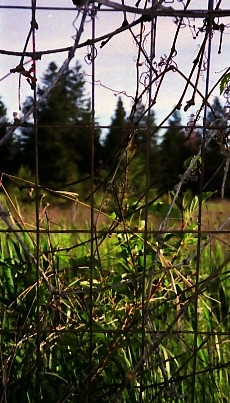 Fence. Spokane
