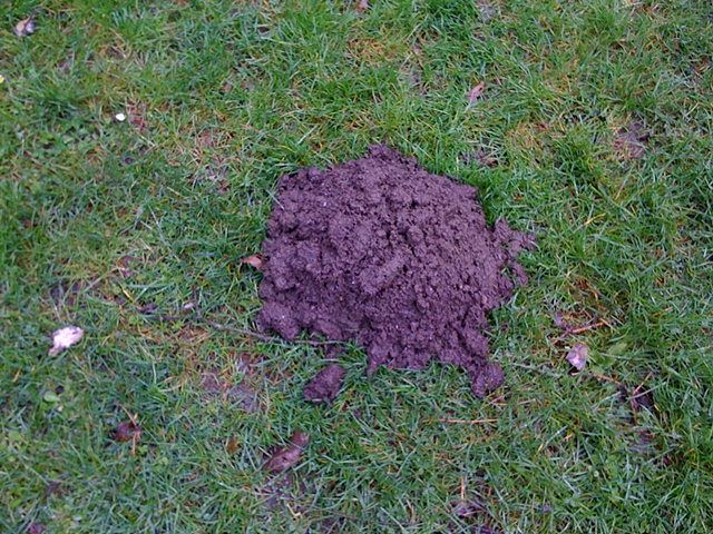 Molehill, Volunteer Park