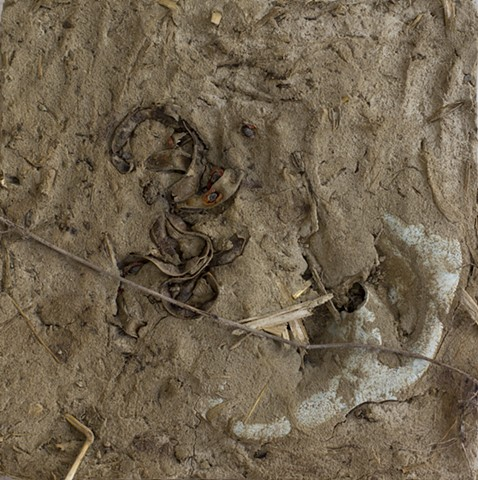 Mud (Acacia)