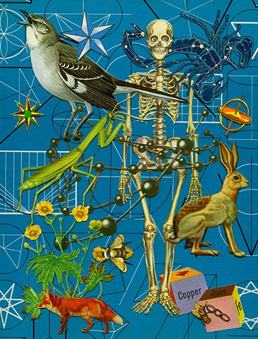 mockingbird praying mantis skeleton hare fox buttercup scorpio collage