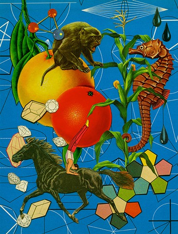 seahorse monkey horses fruit geometry tetradedron collage