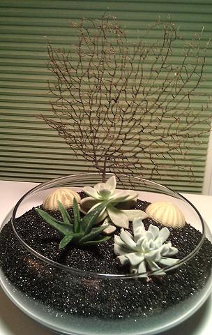Black Succulent