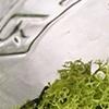 Moss Jar