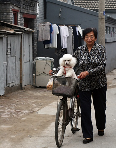 Hutong Poodle