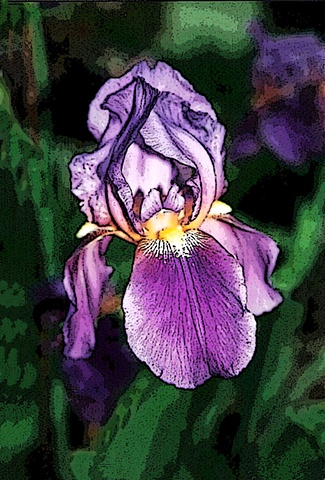 iris, flowers, purple flowers, flora