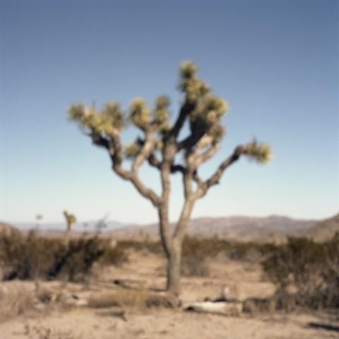 Part 1 – Vestibule/Circle 1 Found in the dark wood of error/Suffering the sinless (Skull Rock Loop, Joshua Tree National Park, California)