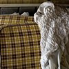 Still Life with Plaid and Plastic Sheet