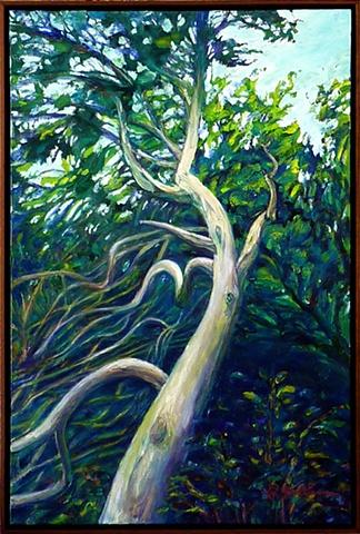 Twisted cedar at Lakeside