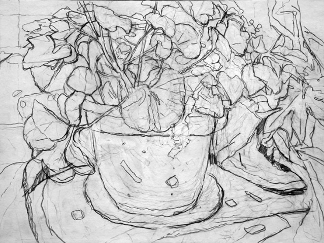 Geraniums (drawing)