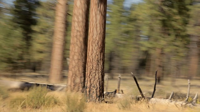 turning pines film still 7 michael paulus