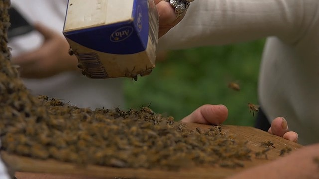 Beekeepers in Glostrup