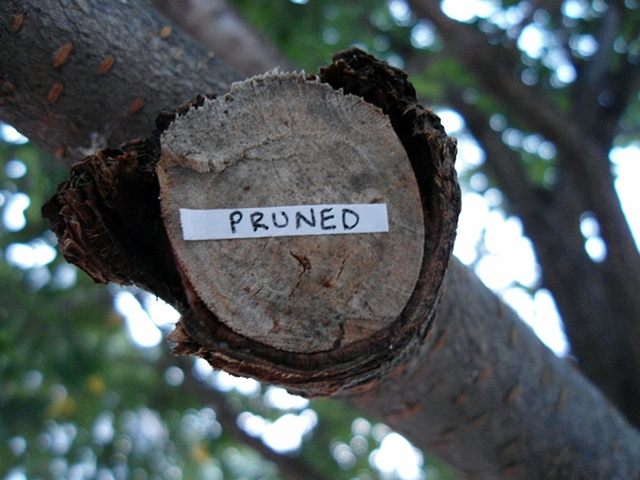 Actions Around Studio A: Pruned