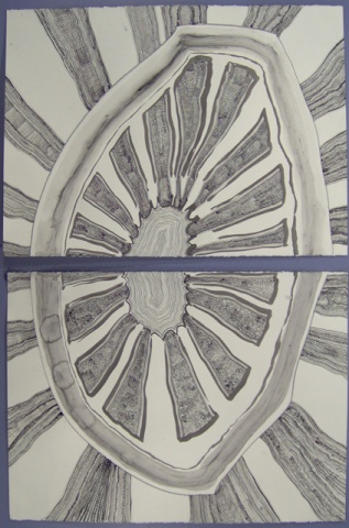 Lemon Rind Draw-Ring