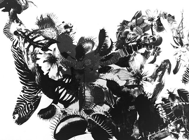Zoo (detail zebra)