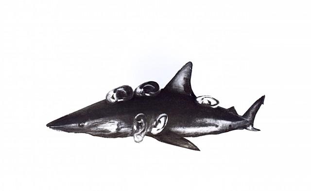 Ear Shark