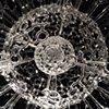 Radiolaria (detail)