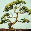 TreeTree