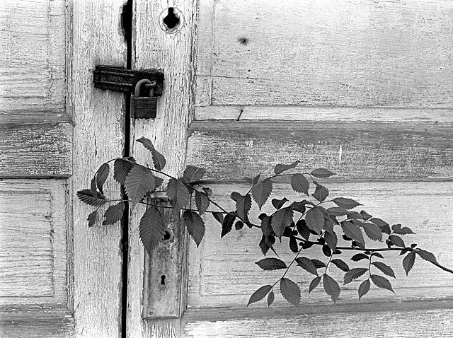 Branch Agin Door