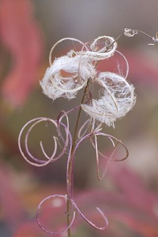 Last Bloom of Fall