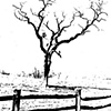 Farm Tree Litho