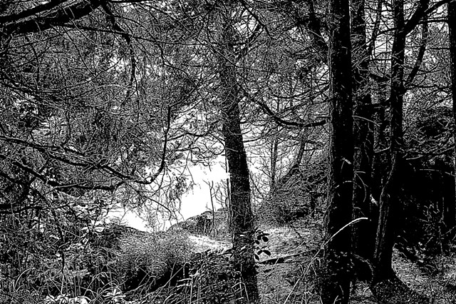 Grove by the Sea in Black and White