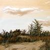 Sunken Meadow Dunes