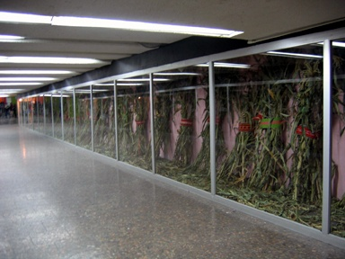 Installation View, Metro Alameda, Right Side